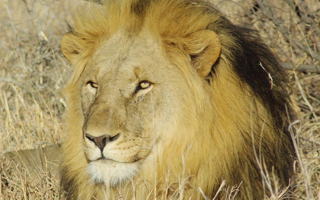 Morukuru Madikwe, notre tout premier safari en famille…