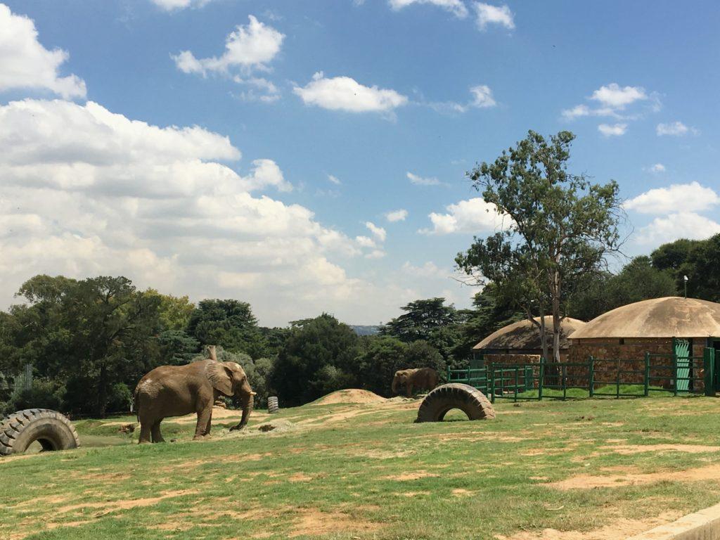 Zoo Johannesburg 3