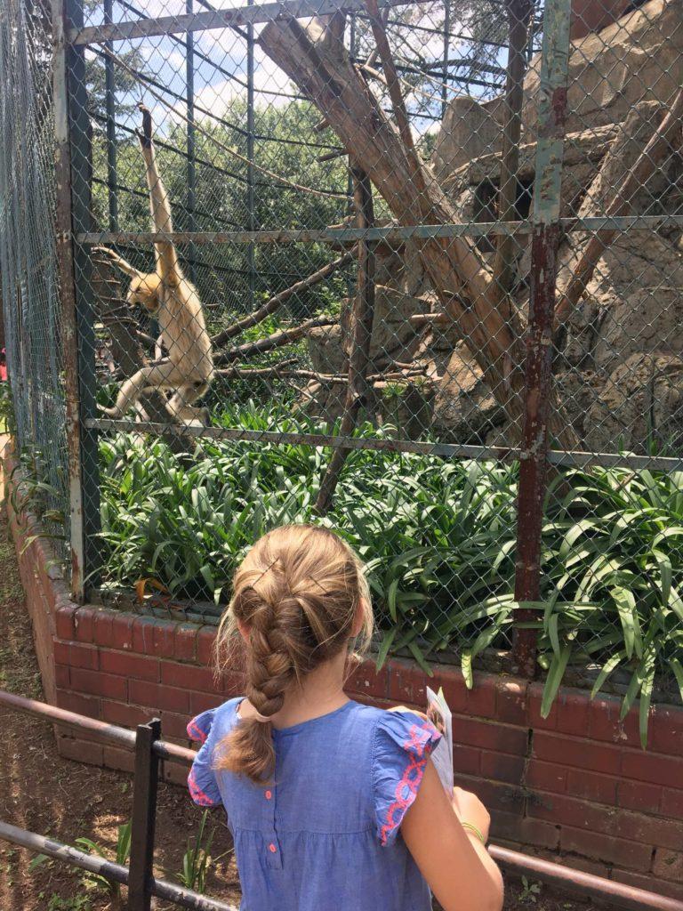 Zoo Johannesburg 8