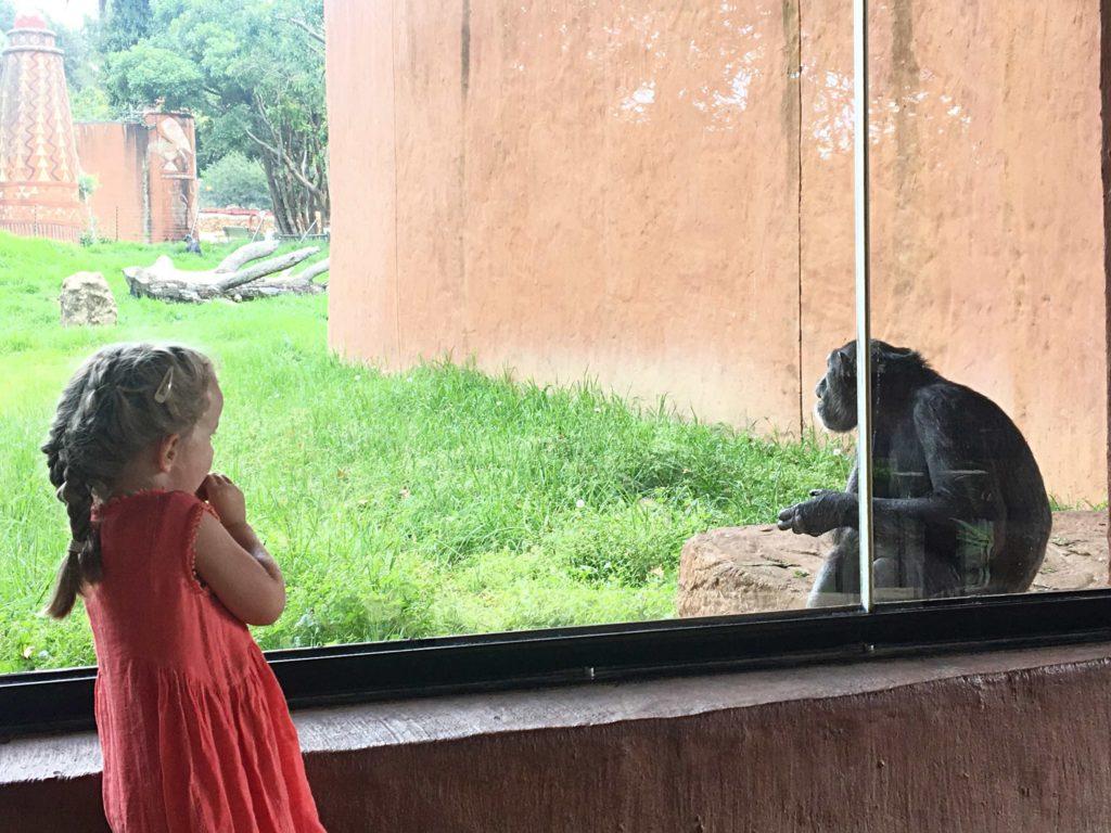 Zoo Johannesburg 9