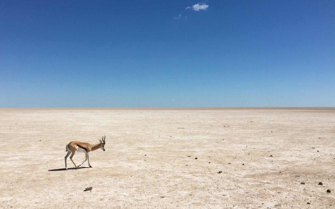 Namibie: le paysage lunaire d'Etosha