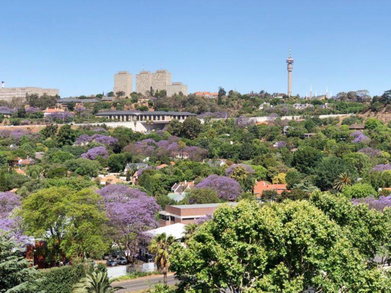 Jacaranda Johannesburg