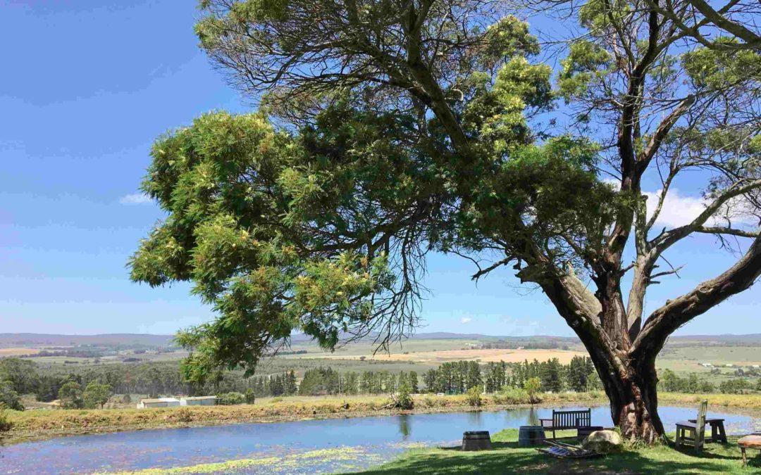 Stanford Hills, une jolie découverte dans l'Overberg