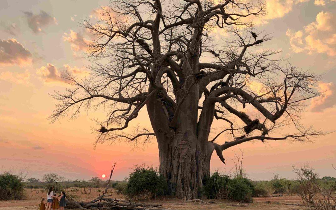 Zambie – Malawi: Voyage au coeur de l'Afrique