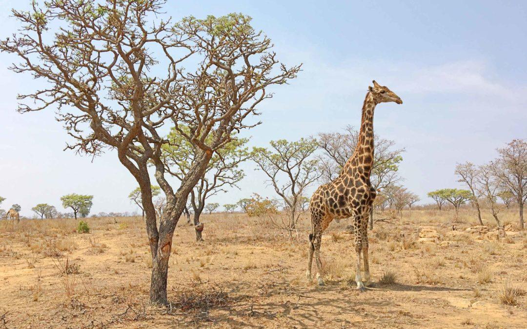 Best of Afrique du Sud: Coups de coeur et incontournables!