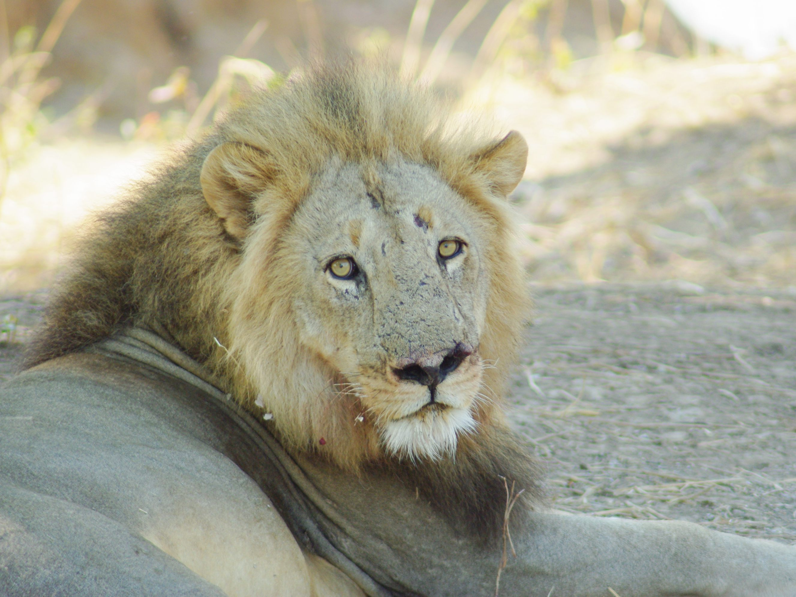 5 itinéraires pour 2 semaines en Afrique du Sud