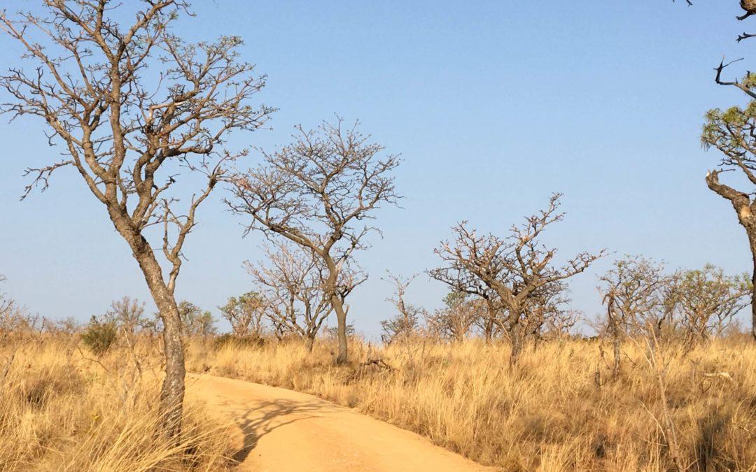3 semaines à 1 mois en Afrique du Sud: 7 itinéraires