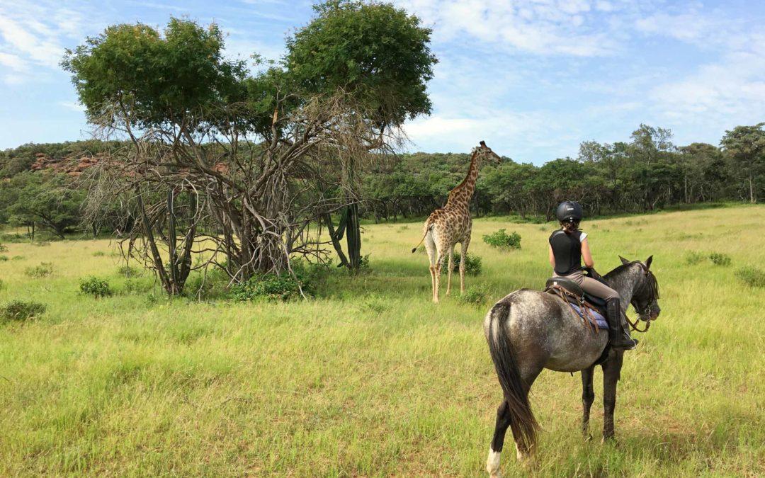 Safaris à cheval et chevauchées africaines…