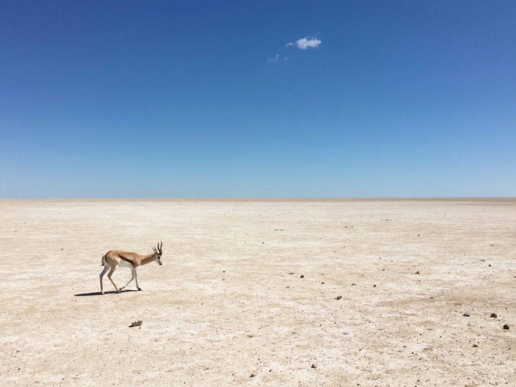 Botswana incontournables