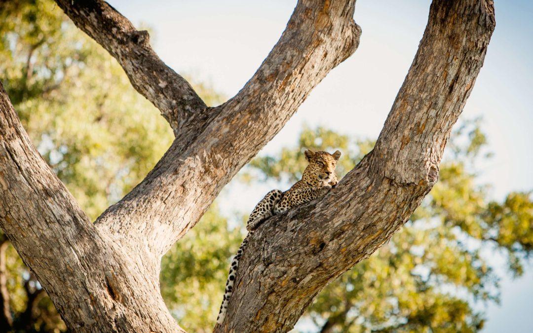 Botswana: 5 incontournables du paradis sauvage