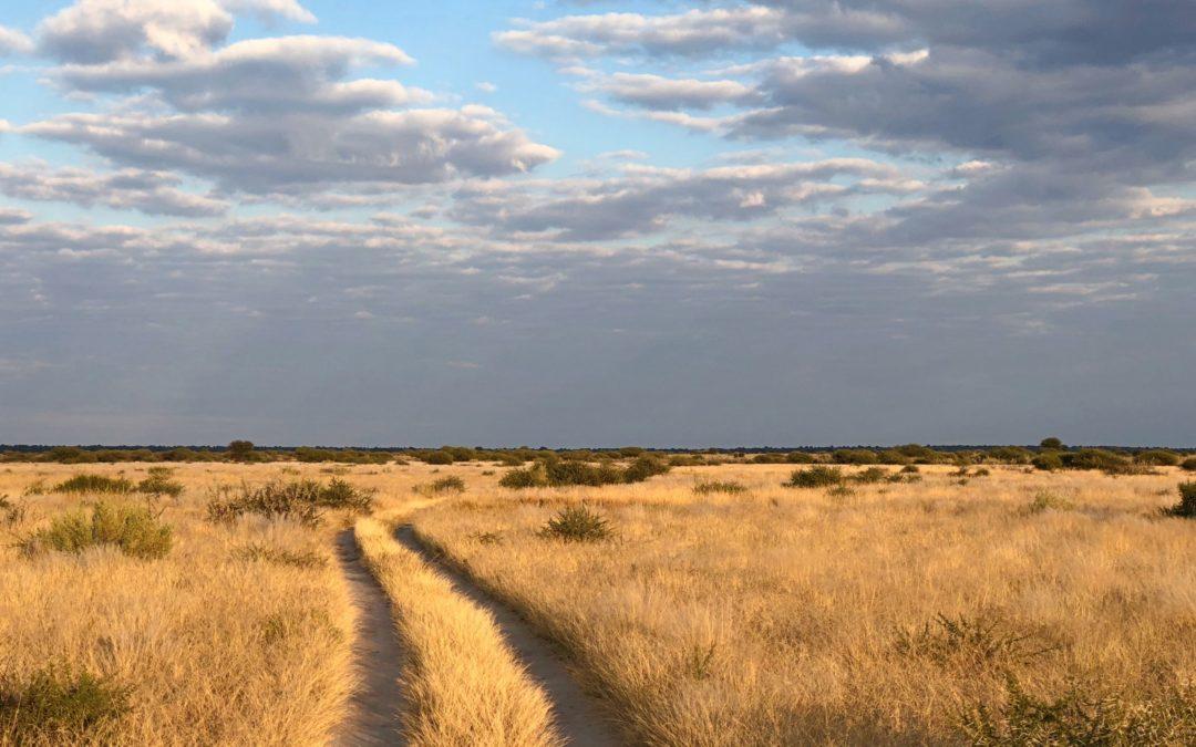 Kalahari Plains: le désert pour seul horizon