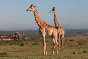 Safari Cape Town