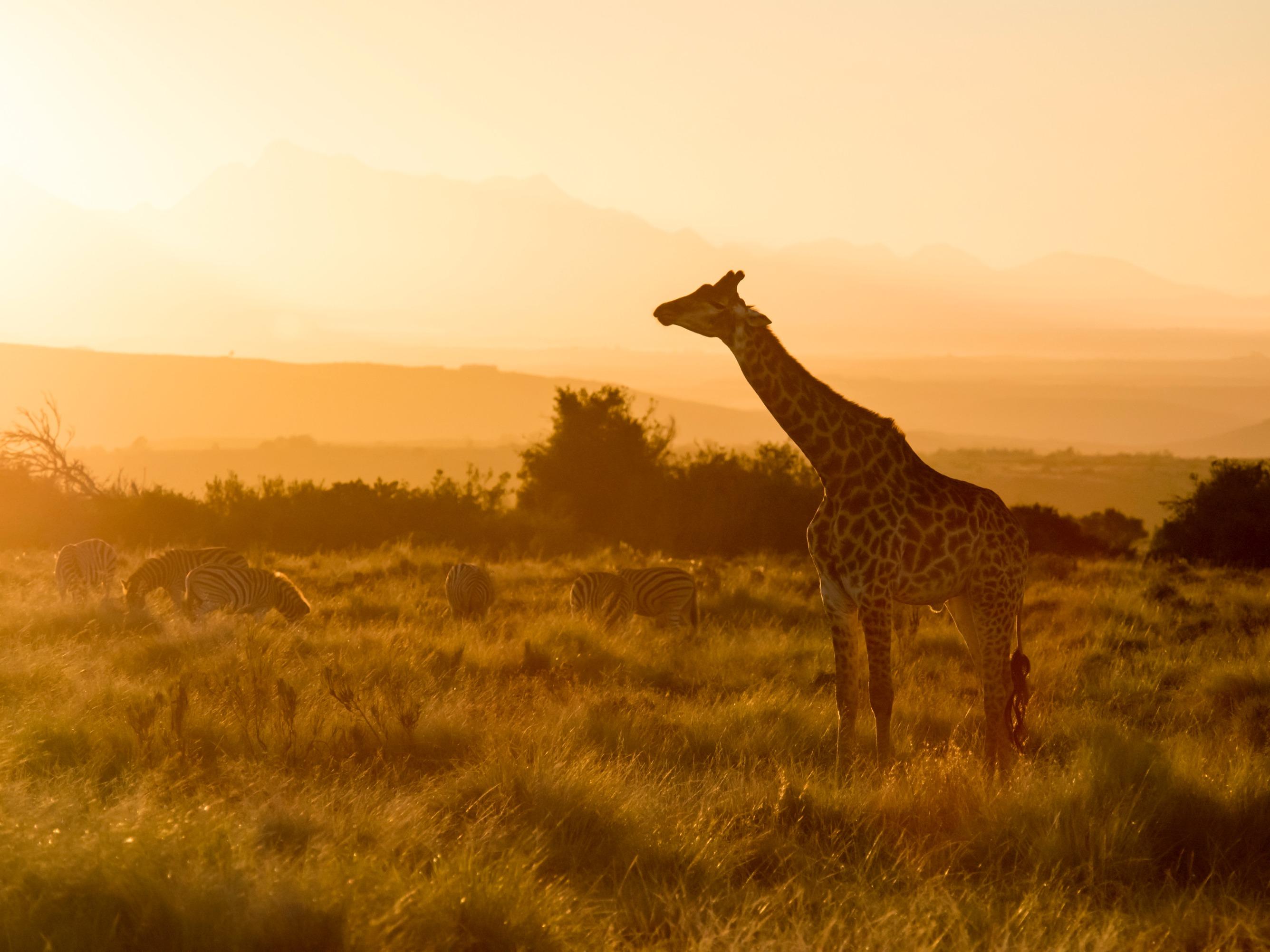 Où faire un safari depuis Cape Town?